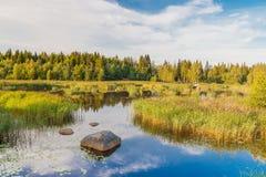 Lago tranquilo Fotografía de archivo