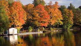 Lago tranquilo en el parque en un día claro en otoño temprano almacen de metraje de vídeo
