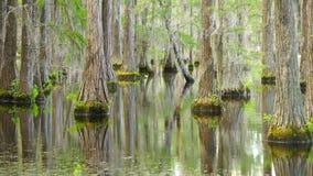 Lago tranquilo Marsh Cypress Trees Deep South Georgia los E.E.U.U. almacen de video