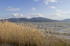 Lago Trasimeno Stock Images