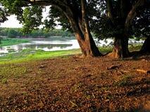 Lago tree Fotografia Stock