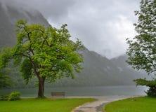 Lago tree del banco Fotos de archivo libres de regalías