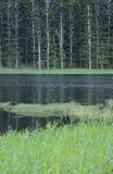 Lago tropicale Fotografia Stock Libera da Diritti