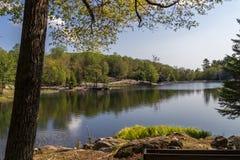 Lago trout in Parc Omega Canada Fotografia Stock Libera da Diritti