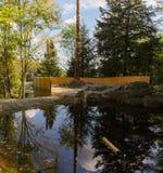 Lago trout in Parc Omega Canada Immagine Stock