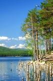 Lago Turgoyak, Urales meridionales Foto de archivo libre de regalías