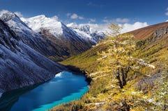 Lago turquoise entre las montañas coronadas de nieve y alerce amarillo Fotografía de archivo