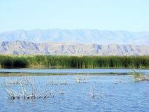 Lago Tuzkan, l'Uzbekistan Fotografie Stock