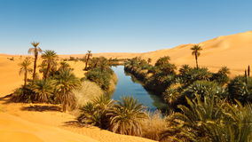 Lago Umm Alma - oásis do deserto - Sahara, Líbia Imagens de Stock Royalty Free