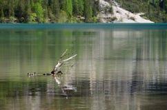 Lago in un giorno nuvoloso, dolomia, Italia Braies Fotografia Stock Libera da Diritti