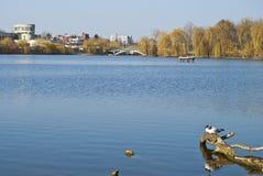 Lago urbano com gaivotas Imagens de Stock Royalty Free