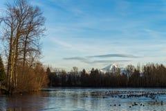 Lago urbano en parte congelado Imagen de archivo libre de regalías