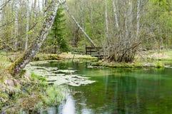 Lago verde Imagens de Stock