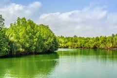 Lago verde Imagens de Stock Royalty Free