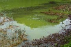 Lago verde del sao Miguel, las islas de Azores, Portugal de los furnas Fotografía de archivo