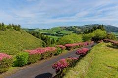 Lago verde del sao Miguel, las islas de Azores, Portugal de los furnas Foto de archivo libre de regalías