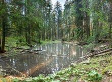 Lago Verkhovoye imagens de stock royalty free