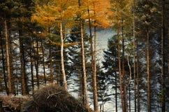 Lago visto atrás das cores do treesautumnal das árvores no pico Foto de Stock Royalty Free