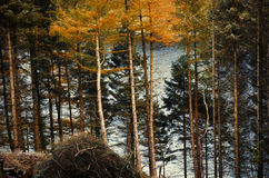 Lago visto da dietro i colori di treesautumnal degli alberi al picco Fotografia Stock Libera da Diritti