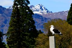 Lago Wakatipu Fotografia Stock Libera da Diritti