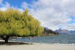 Lago Wakatipu, Nueva Zelanda, árbol Queenstown imagen de archivo
