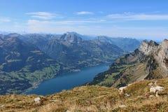 Lago Walensee Imagen de archivo