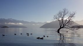 Lago Wanaka Fotografie Stock