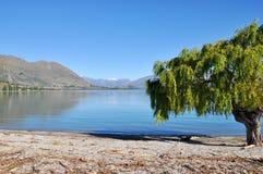 Lago Wanaka na ilha sul de Nova Zel?ndia em um dia ensolarado imagem de stock