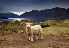 Lago Wanaka, Nueva Zelandia Foto de archivo libre de regalías