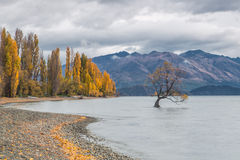 Lago Wanaka, Nuova Zelanda Immagine Stock Libera da Diritti