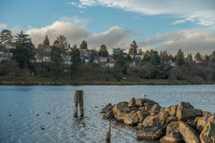 Lago Washington Homes And Jetty Immagine Stock