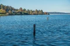 Lago Washington - Shoreline 9 Fotografie Stock