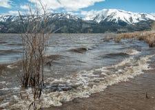Lago Washoe, alta marea Fotografia Stock