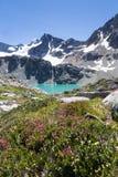 Lago Wedgemount del turchese, montagna del cuneo e fiori alpini, Whistler, BC Fotografia Stock Libera da Diritti