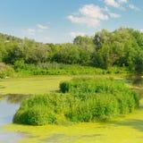 Lago wetland fotos de stock