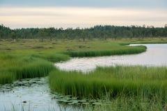 Lago wetland ad una palude Fotografia Stock Libera da Diritti
