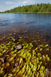 Lago wilderness Foto de archivo