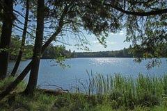 Lago wilderness na luz do sol brilhante fotos de stock royalty free