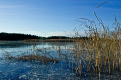 Lago winter Fotografia de Stock Royalty Free
