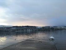 Lago winter con il cigno fotografia stock libera da diritti