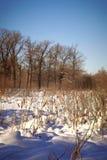 Lago winter con una canna Fotografia Stock Libera da Diritti