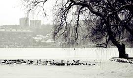 Lago winter, pájaros y ciudad urbana Fotografía de archivo