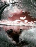 Lago Wolsztyn en mayor Polonia Imágenes de archivo libres de regalías