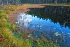 Lago woods Immagini Stock