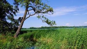 Lago Wulpinskie en la región de Masuria Lakeland en Polonia en la estación de verano almacen de metraje de vídeo
