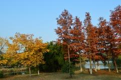 Lago XiangHu Fotos de Stock