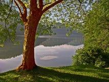Lago y árbol Imágenes de archivo libres de regalías