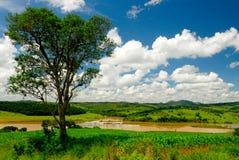 Lago y árbol Imagen de archivo libre de regalías