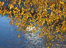 Lago y árbol Fotografía de archivo libre de regalías