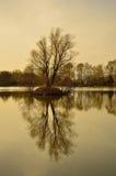 Lago y árboles autumn Fotos de archivo
